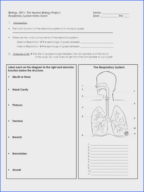 awesome Respiratory System For Kids for kids respiratory system