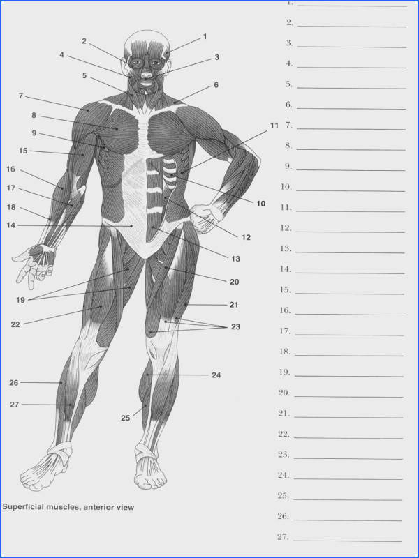 Label Muscles Worksheet MuscleAnatomy