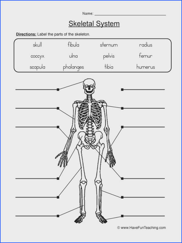 Best 25 Skeletal system worksheet ideas on Pinterest