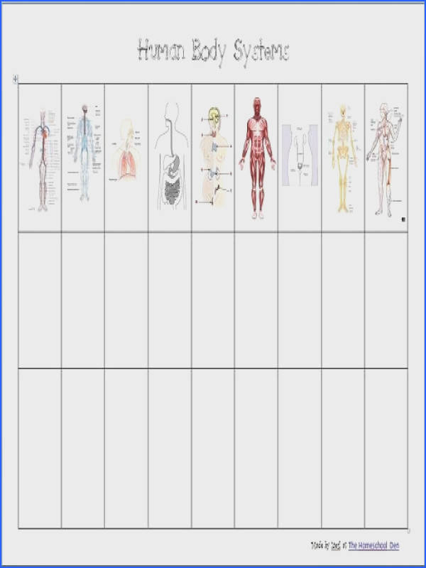 Gr 4 6 Body systems printable worksheets AND a great list of hands on