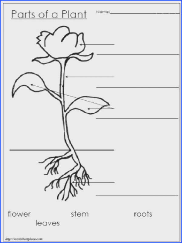 parts of plants guided practice verbally named parts then cut out labels and glued in the blanks independent practice drew the diagram and labeled the