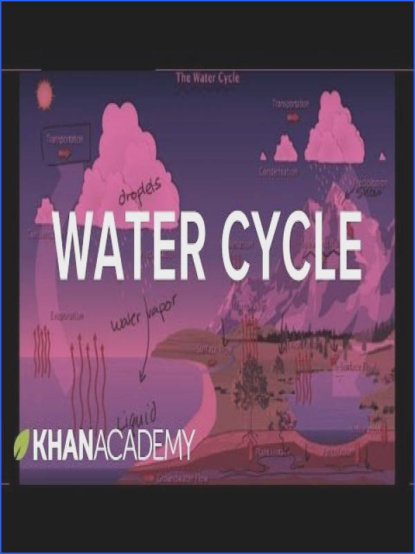 The water cycle Ecology