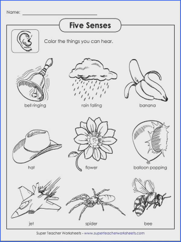 Use Five Senses printable activities from Super Teacher Worksheets in your classroom Check out our