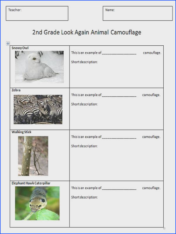 Animal Adaptations Worksheets Mychaume
