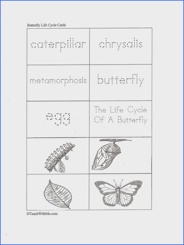 Classroom Freebies Butterfly Life Cycle Cards