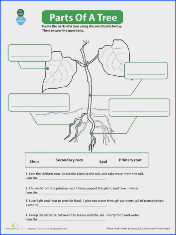 The Parts of a Tree Science WorksheetsHomeschool