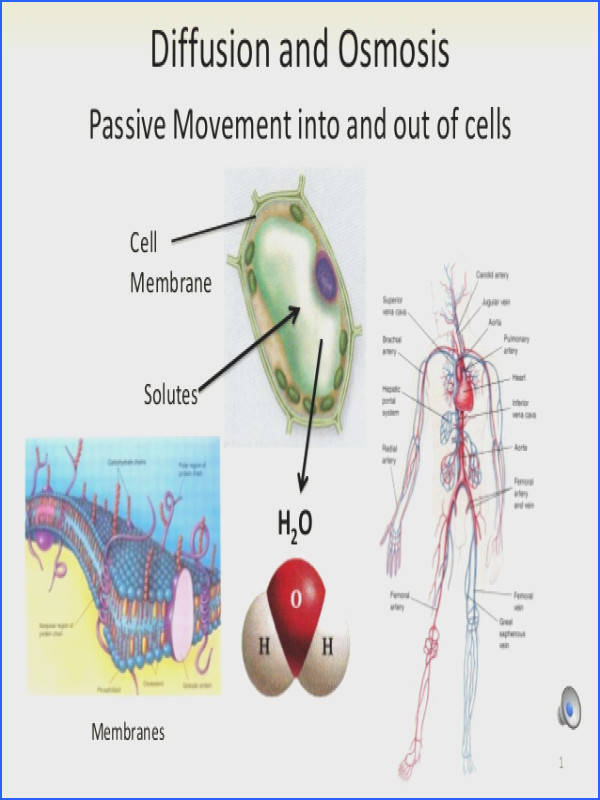 Diffusion and Osmosis Passive Movement into and out of cells H2O Solutes Cell Membrane Membranes 1