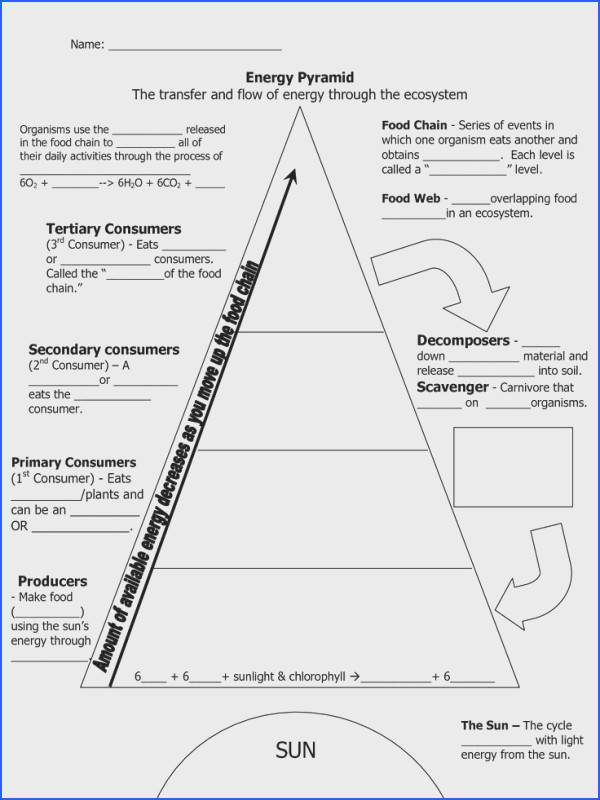 Image result for energy pyramid worksheet middle school