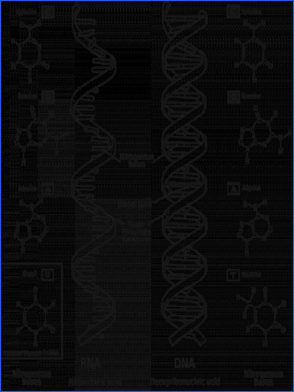 DNA vs RNA[edit]