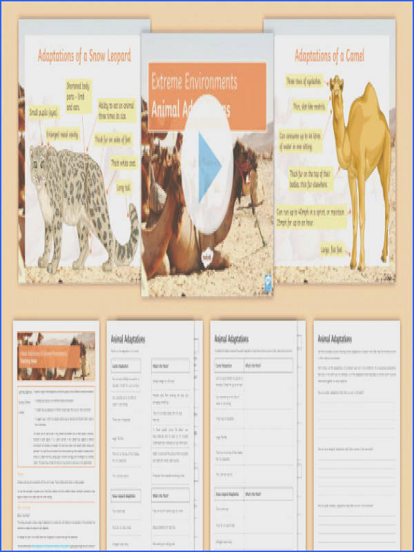 Animal Adaptations to Extreme Environments Lesson Pack camel spider monkey snow leopard