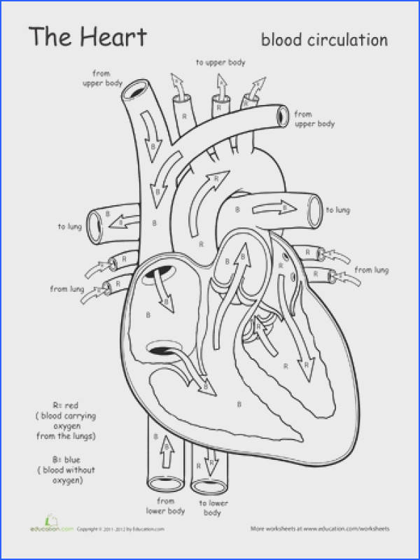Awesome Anatomy Follow Your Heart