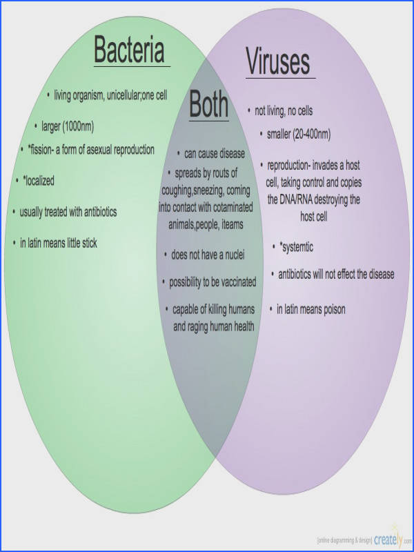 Bacteria vs Viruses Venn Diagram
