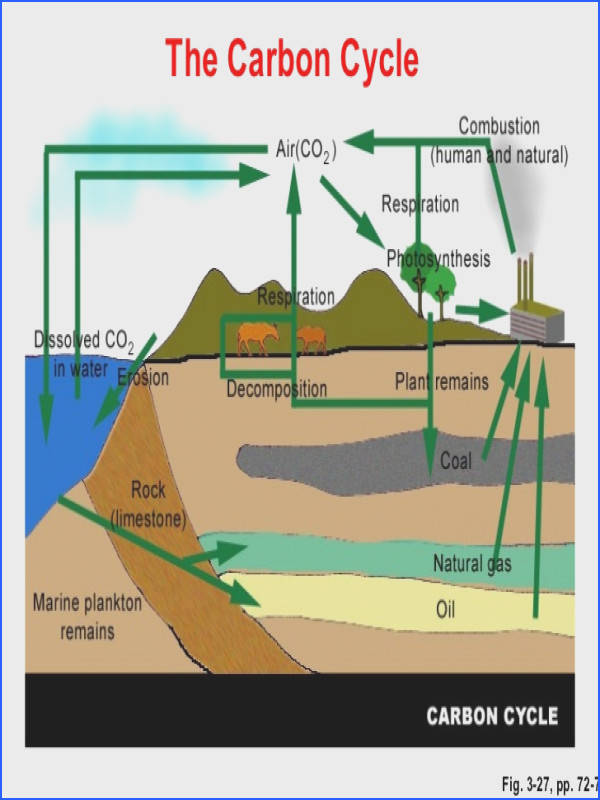 The Carbon Cycle Fig 3 27 pp