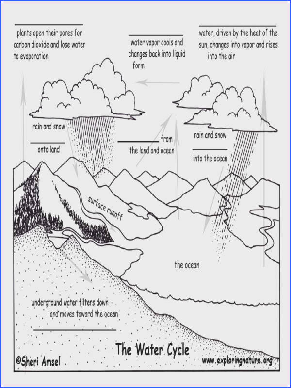 Fill in the Blank Quiz Water Cycle Exploring Nature