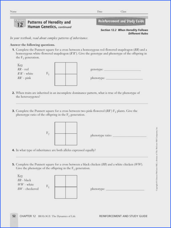 Blood Type Punnett Square Worksheet
