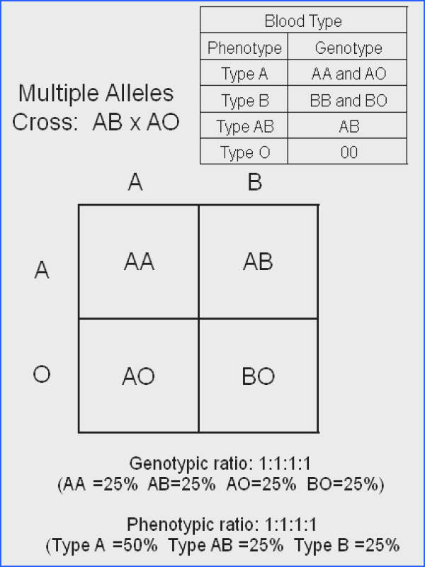 Blood Type Punnett Square Worksheet Worksheets for all Download and Worksheets