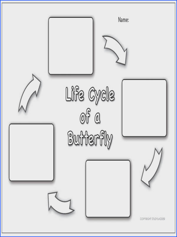 "Butterfly life cycle worksheet & Butterfly Life Cycle · Butterfly Life Cycle Worksheet """"sc"" 1""st"" ""EmilyAnn Theatre"