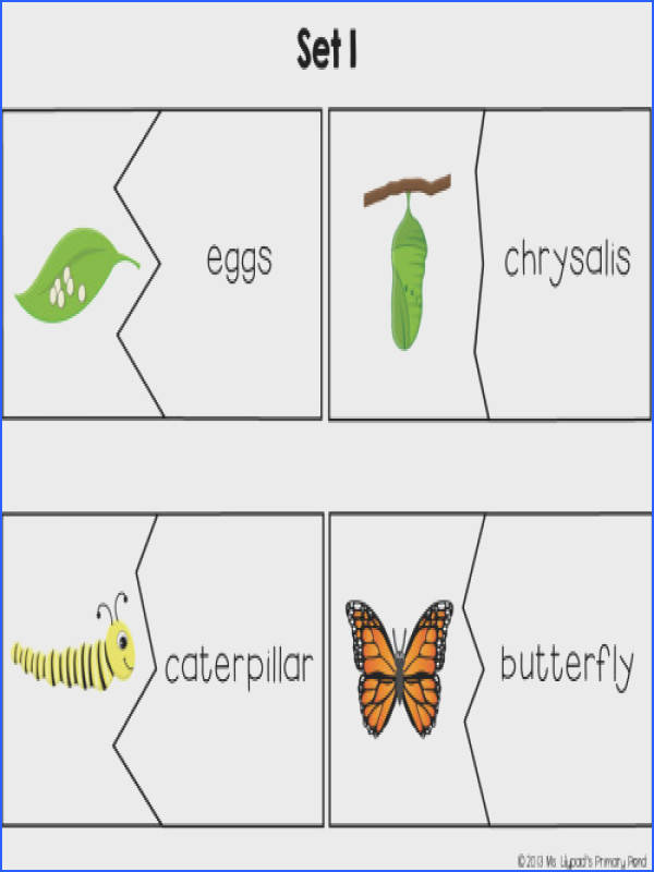 "Kids Love Putting To her These Butterfly Vocabulary Puzzles As A Center They Can Also Use Butterfly Life Cycle Vocabulary Puzzles""""sc"" 1""st"" ""Learning At"