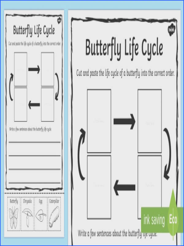 Butterfly Life Cycle Sentence Writing Worksheet Activity Sheet writing worksheet