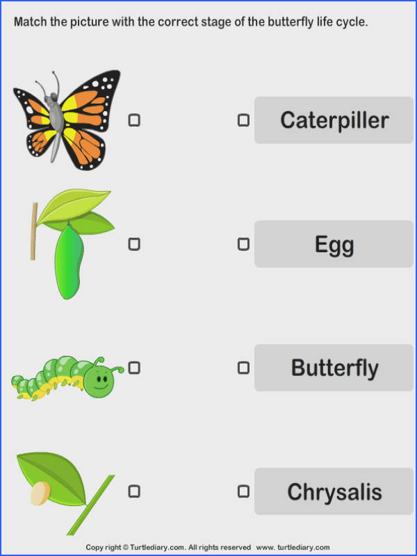 Butterfly Life Cycle Worksheet & butterfly Life Cycle to Label Image Below butterfly Life Cycle Worksheet