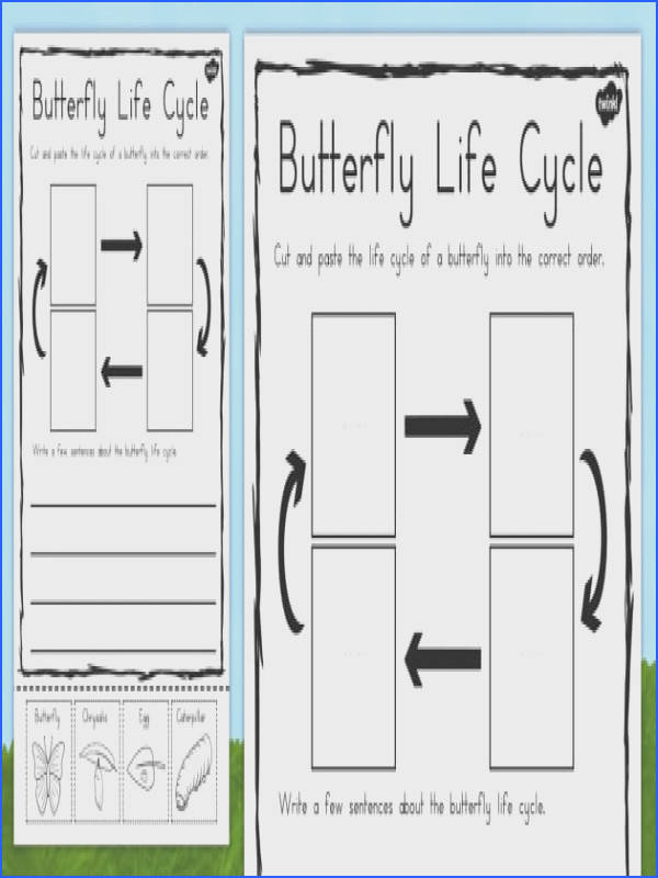 Butterfly Life Cycle Sentence Writing Worksheet Activity Sheet australia worksheet