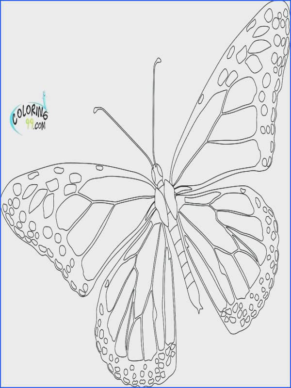 butterfly printable coloring pages coloring page of butterfly free printable detailed butterfly printable coloring pages butterfly printable