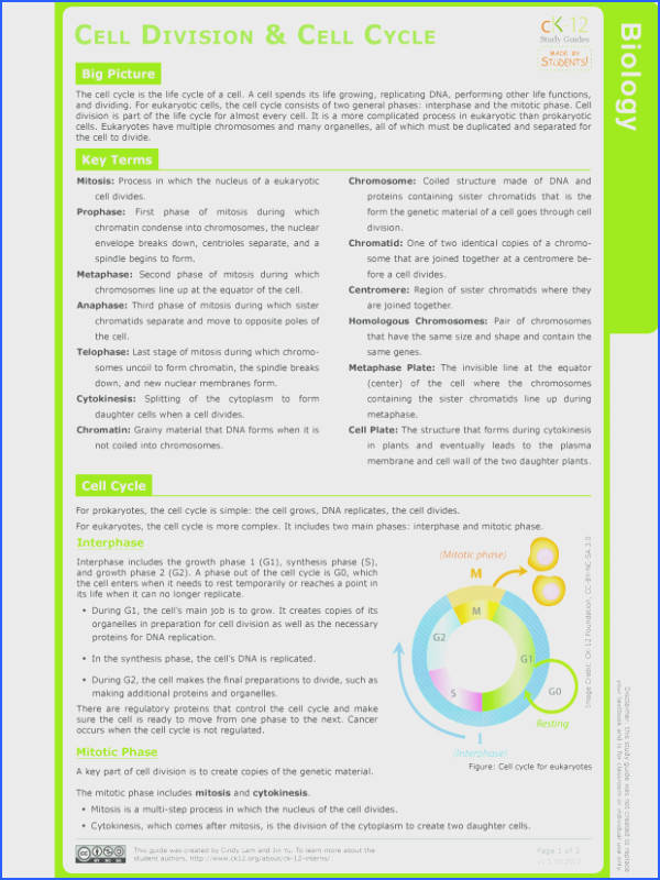 Cell Cycle And Mitosis Worksheet Mitosis Ck 12 Foundat