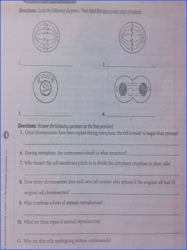 cell division and mitosis worksheet answers free worksheets cytokinesis pho a part of under Math Worksheet