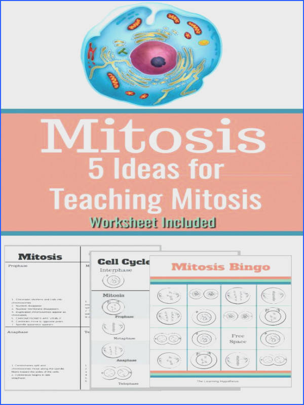 cell division worksheet answers or cell division worksheet answers mitosis cell cycle diagram synthesis occurs in