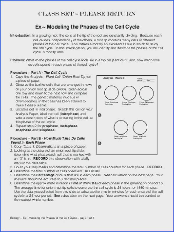 cell division worksheet answers for cell cycle and mitosis worksheet answers the best and most awesome