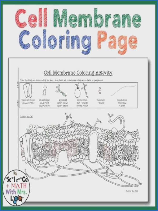 Cell Membrane Coloring Worksheet Answer Key 1 Free Printable Coloring Pages for You