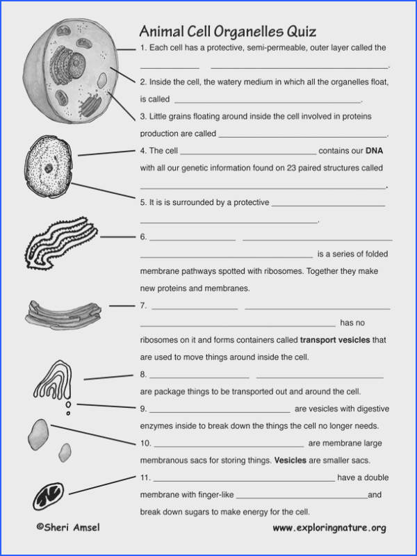 cell organelle worksheet for remediation