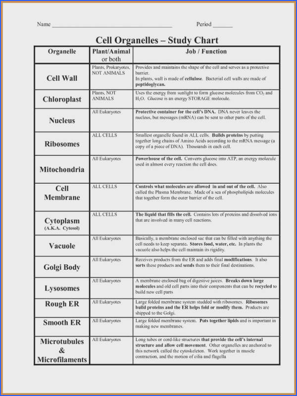 Cell Organelles And Their Functions Worksheet Worksheets for all Download and Worksheets
