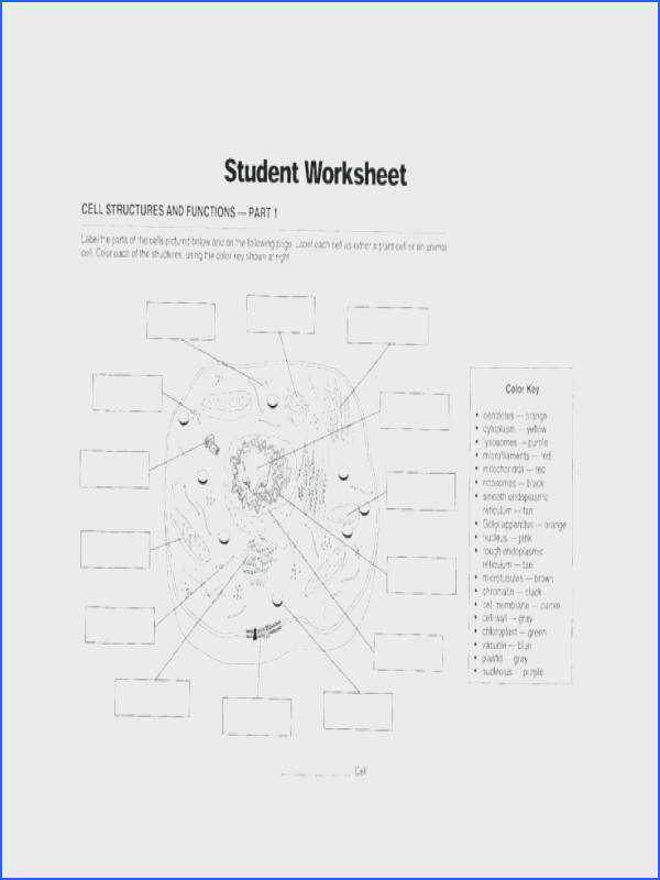 cell structure and function worksheet answers as well as cell structure and function worksheet cool cell