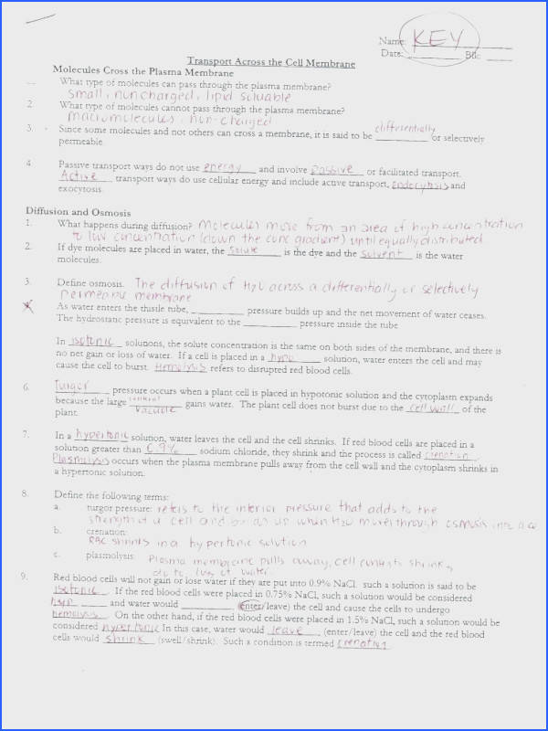 cell structure and function worksheet for plasma membrane diagram coloring worksheet answers membrane structure and function