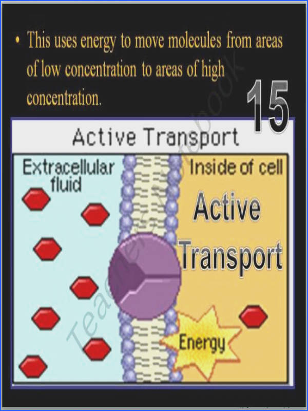 Cell Transport Osmosis Diffusion Active Transport PowerPoint Game from Science from Murf on