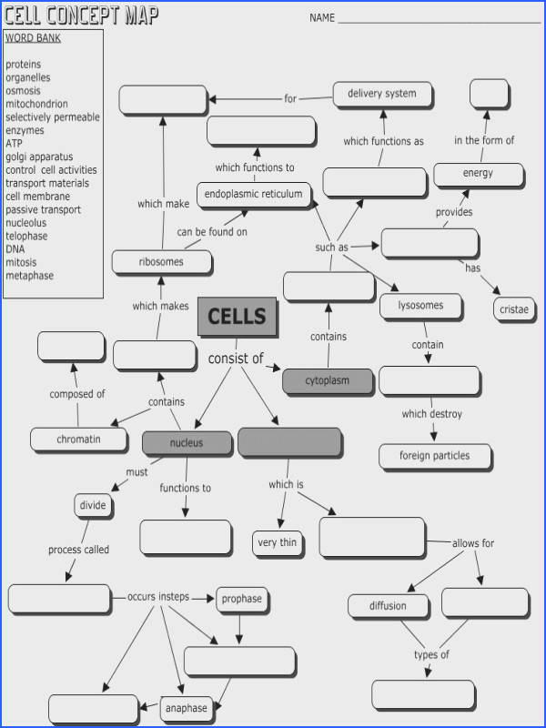 Cell structure and function mind map