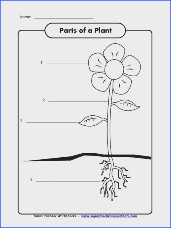 Children can label the parts of a plant from Super Teacher Worksheets