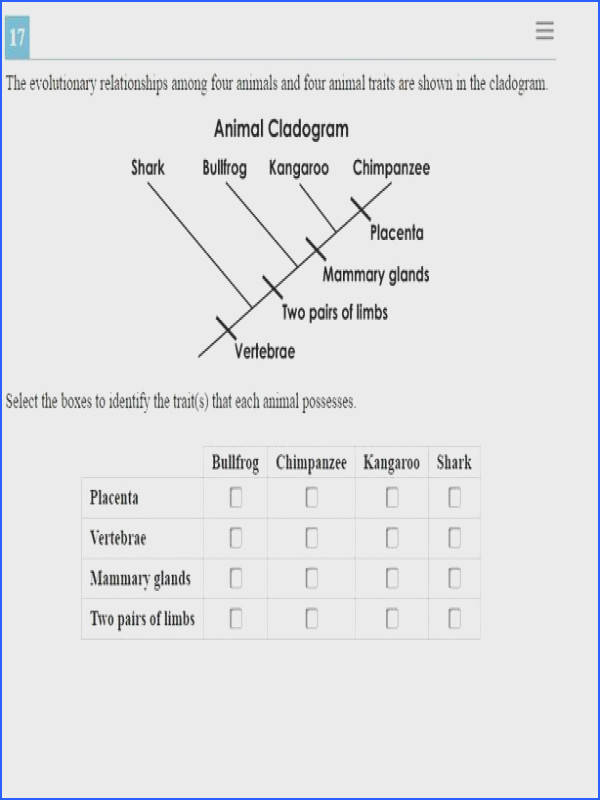 Cladogram Worksheet Answers Homeschooldressage