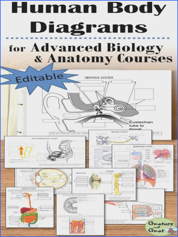 Detailed vocabulary anatomical structures physiology and more detailed diagrams make these worksheets perfect