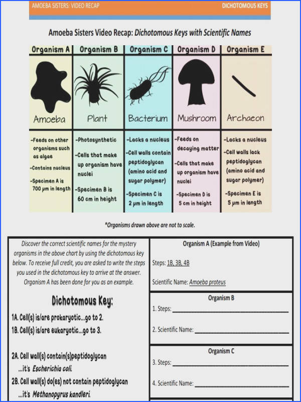 Dichotomous Key handout made by the Amoeba Sisters to visit website and scroll down