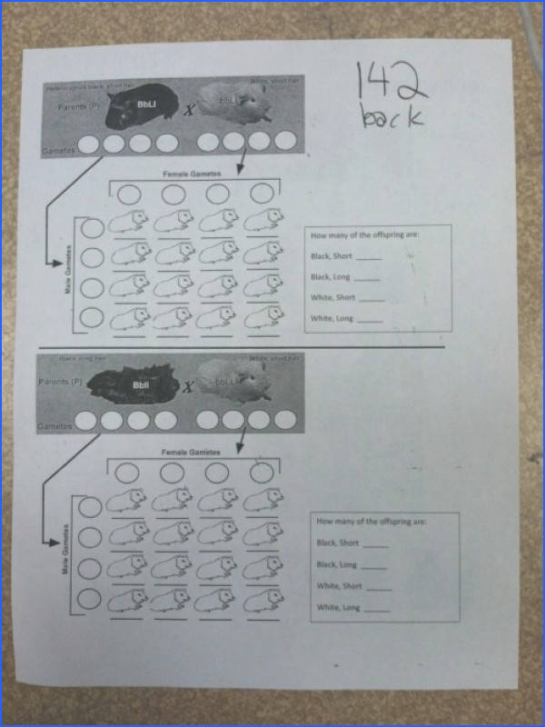 Dihybrid Cross Worksheet Answers Free Worksheets Library