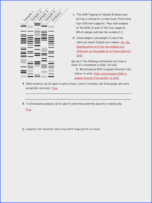 Dna Fingerprint Worksheet