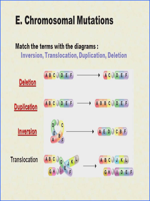 Dna Mutations Practice Worksheet Answers Best Chromosome Mutation Worksheet Resultinfos Dna Mutations Practice Worksheet