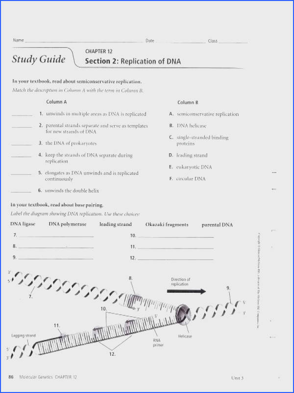 dna replication coloring worksheet replication worksheet answers best of structure and replication worksheet dna replication coloring