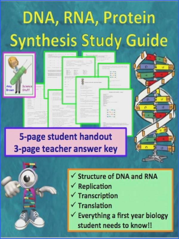 DNA RNA Protein Synthesis Worksheet Study Guide