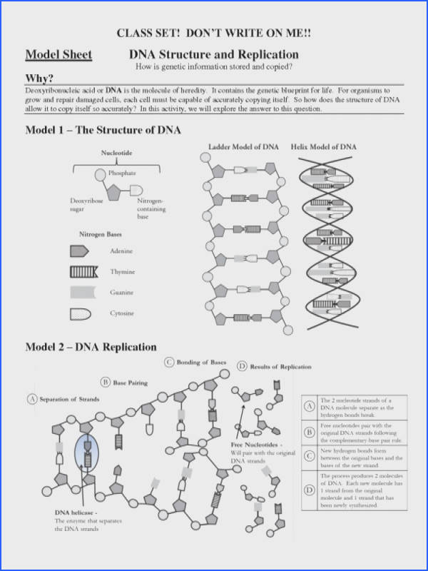 dna the molecule of heredity worksheet mon worksheets dna replication worksheet worksheet 21 dna
