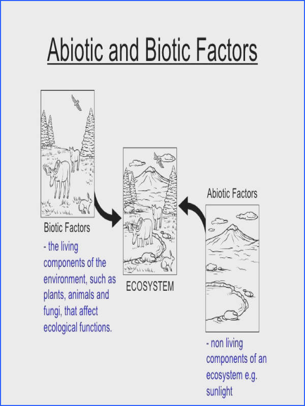 ecology biotic and abiotic factors worksheet Google Search