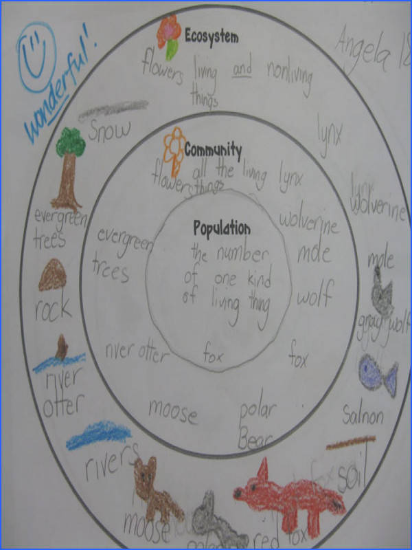 ecosystem munity and population concentric circle map would divide into biotic and