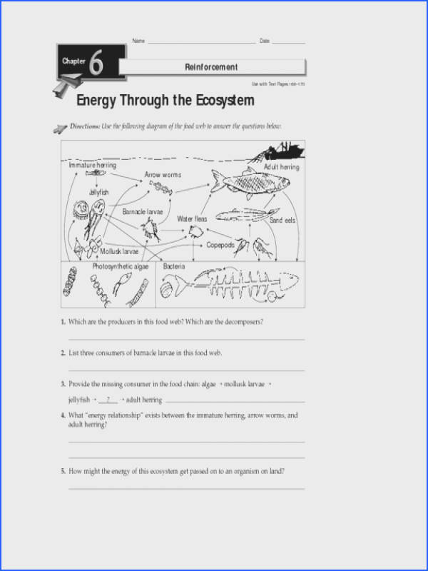 Energy Through the Ecosystem Worksheet for 3rd 8th Grade